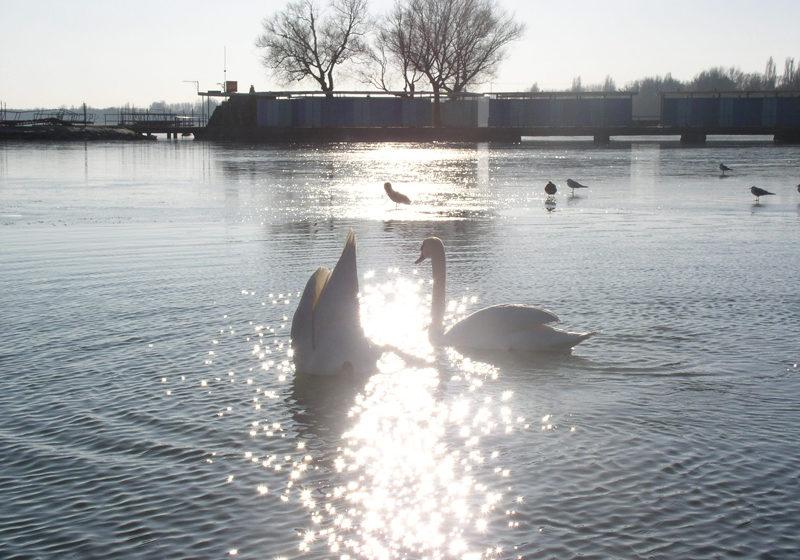 Balatoni fórum a víz világnapja jegyében
