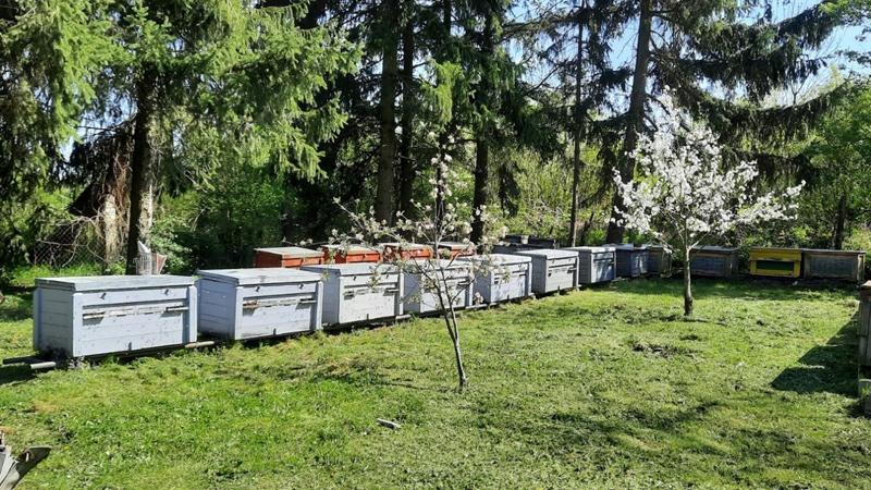 Tudományos kutatás a méhek védelméért